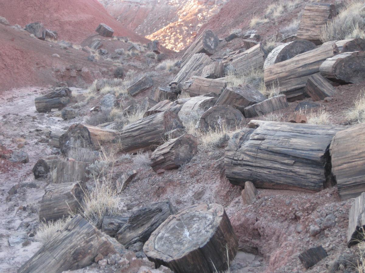 Petrified Forest 1.JPG