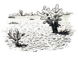 desert_pavement.jpg