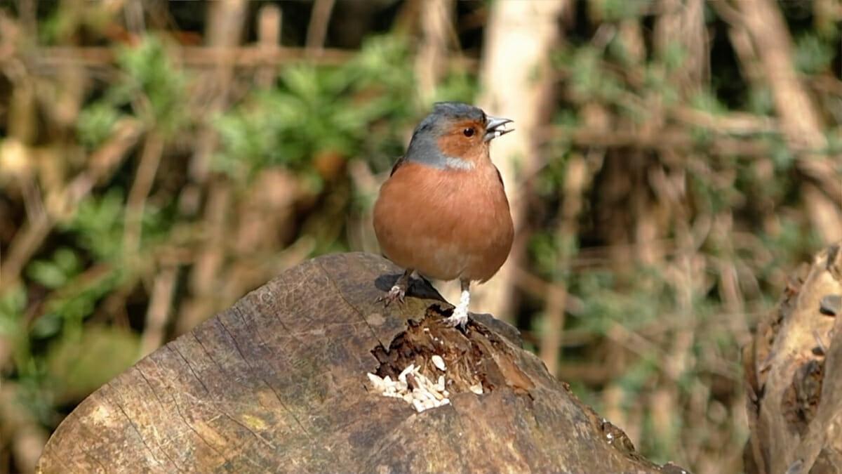 bird20on20log-y7QlPv.jpg