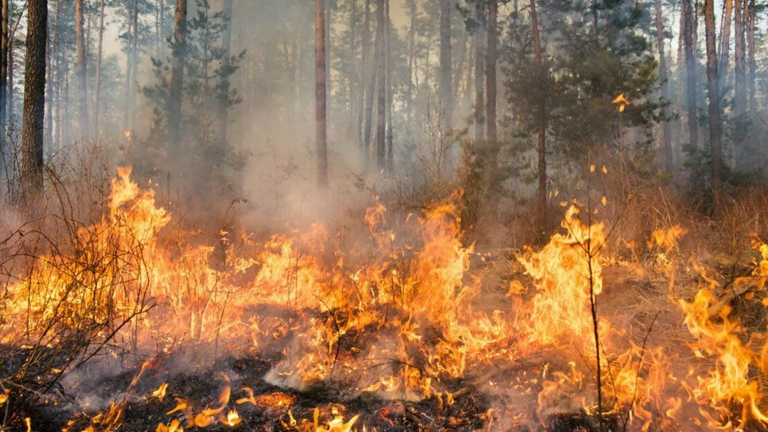 Wildfire burning through forest floor.