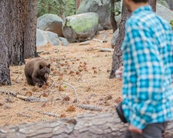 Man looking at a bear from a safe distance away