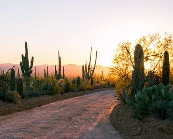 Dirt road in the desert around sundown