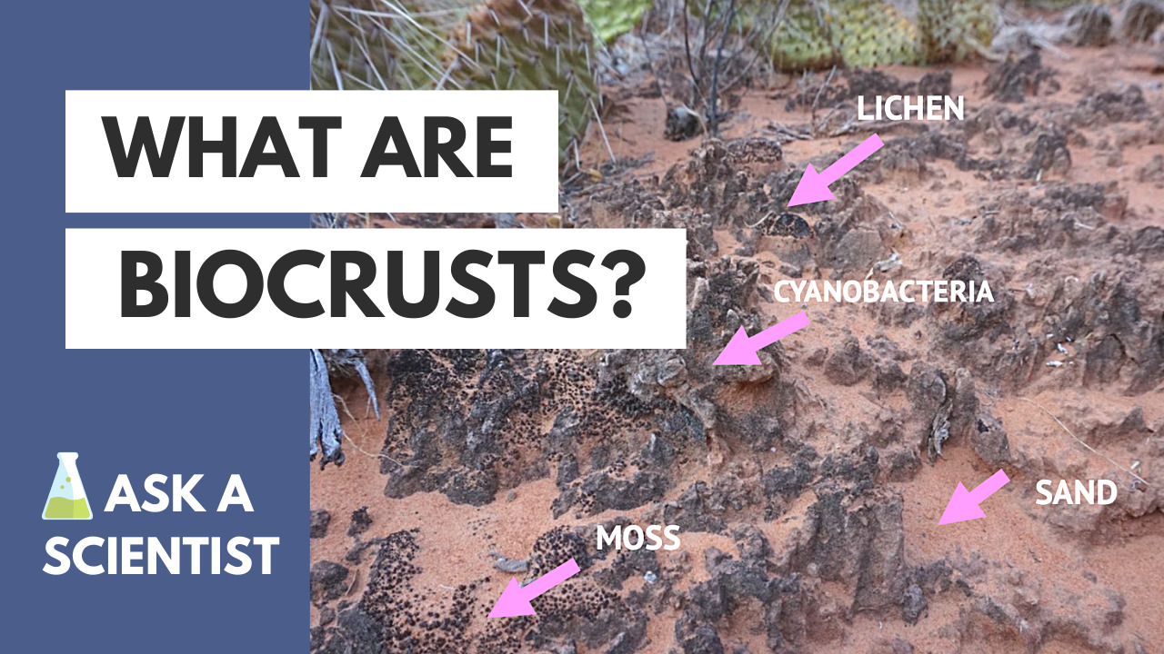 Biocrust soil with labels for component parts