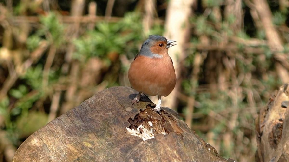 bird on log.jpg