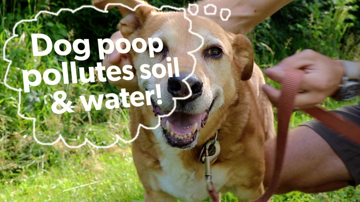 dog poop pollutes water.jpg