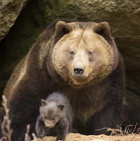 iStock-Bear family crop.jpg