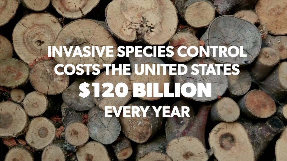 invasive species.jpg