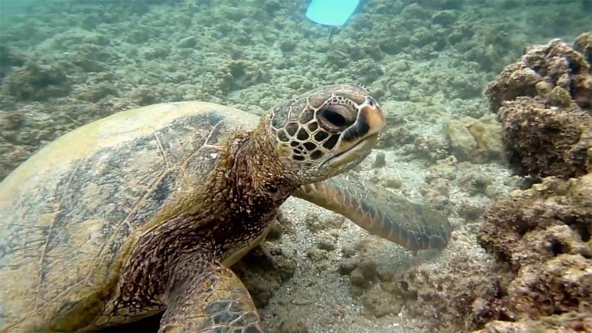 underwater turtle.jpg